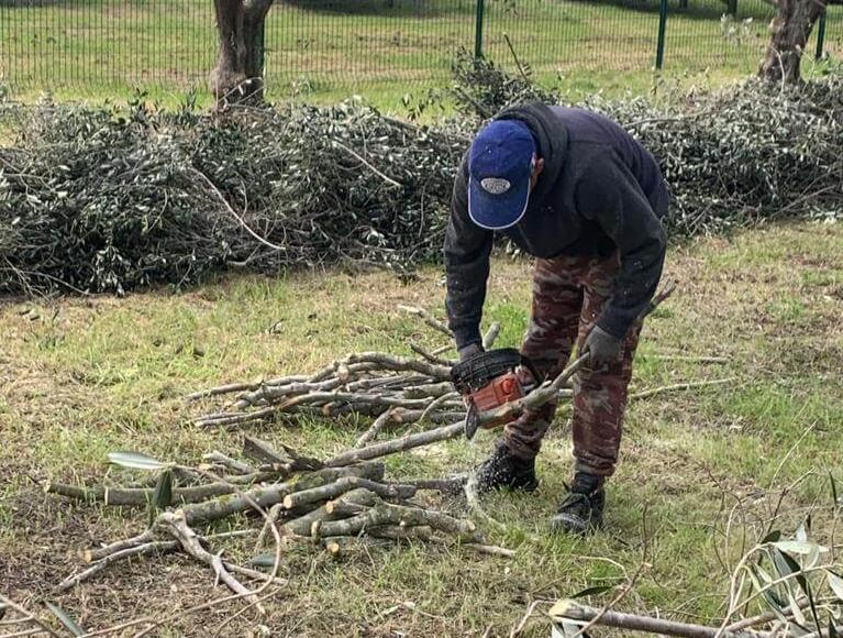 Mondatura alberi e trinciature dei rami 4